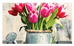 tulipanes-2